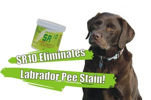 SR10 Carpet and Rug Stain + Odor Removal-764400